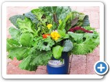 AlegriaFreshBouquet2WEB