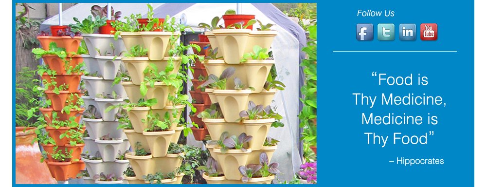 Alegría Farms - hydroponic vertically grown produce